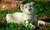Animal World & Snake Farm Zoo - New Braunfels: Visit for Two or Four to Animal World & Snake Farm Zoo (Up to 54% Off)