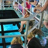 Up to 52% Off Glass-Bottom-Boat Ride in Key Largo