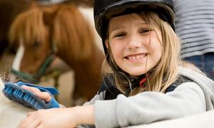 Les Ecuries des Coudriers: Balade découverte de 30 min à 1h pour 1 ou 2 enfants venant ensemble dès 11,90 € aux Ecuries des Coudriers EARL EDC