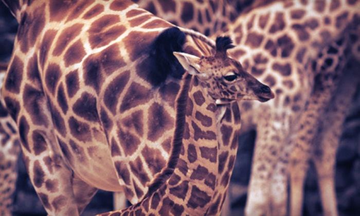 Wild Animal Safari - Pine Mountain: $19 for Tour for Two at Wild Animal Safari (Up to $39.90 Value)