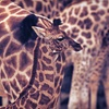 52% Off at Wild Animal Safari