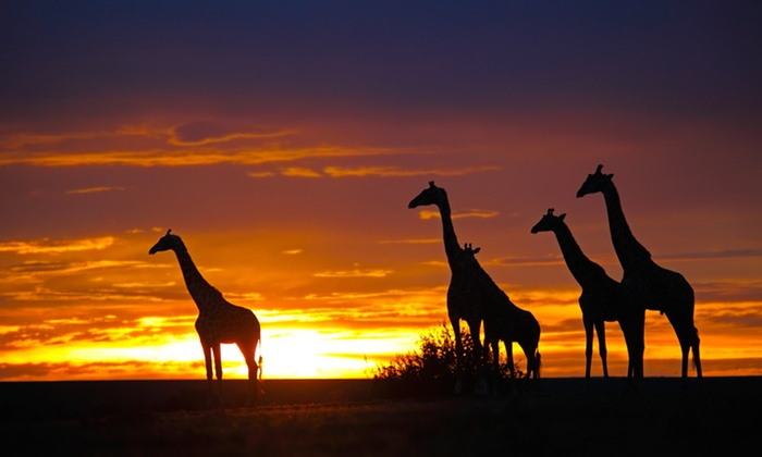 Kenya Safari Tour with Airfare from Friendly Planet Travel - Kenya: 8-Day Kenya Safari with Airfare and Game Drives from Friendly Planet Travel. Price/Person Based on Double Occupancy.