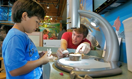Admission for One, Two, or Four to Hands On Children's Museum (Up to 43% Off)