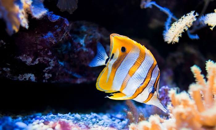 Aqua Terra Habitats, Inc - Northport: $33 for $60 Groupon Toward Aquarium Maintenance  — Aqua Terra Habitats