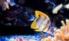 Aqua Terra Habitats, Inc: $33 for $60 Groupon Toward Aquarium Maintenance  — Aqua Terra Habitats