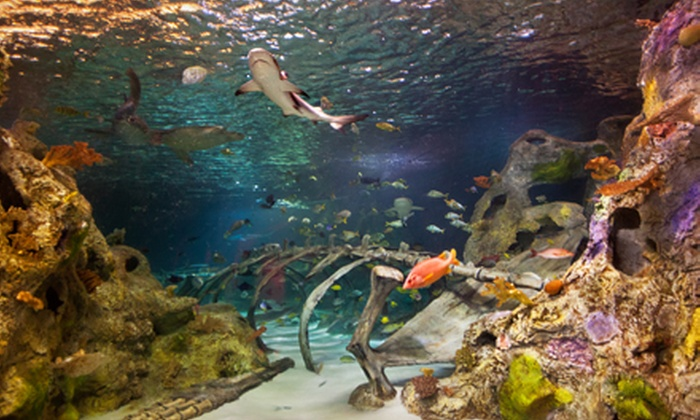 "SEA LIFE Grapevine Aquarium - Grapevine Mills Mall: Visit for Two or ""Sharks After Dark"" Event for One on August 8 or 9 at Sea Life Grapevine Aquarium (Up to Half Off)"