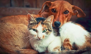 Psicologia e cura degli animali - E-careers: Corso online in lingua inglese in psicologia e cura degli animali con E-Careers (sconto fino a 93%)