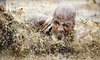 Racing Humans - Conroe: One, Two, Four, or Six Entries to the Racing Humans 5K Adventure Race in Conroe (Up to 54% Off)