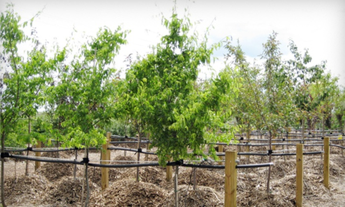 Bentley Ridge Tree Farm & Nursery - Urbandale: Locally Grown Trees and Shrubs at Bentley Ridge Tree Farm & Nursery (Half Off). Three Options Available.
