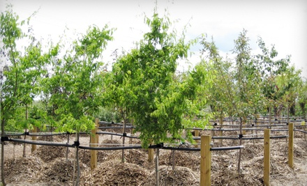 Locally Grown Trees and Shrubs at Bentley Ridge Tree Farm & Nursery (Half Off). Three Options Available.