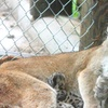 40% Off Zoo Outing in Mount Vernon