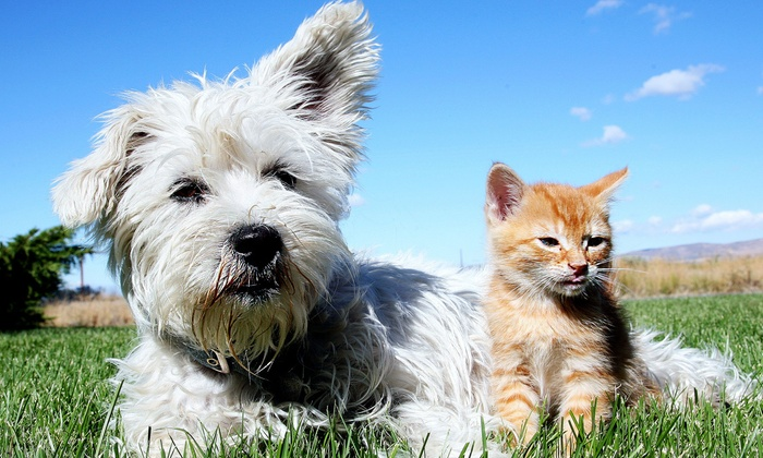 Mueller Animal Hospital - Hialeah Acres: One Complete Feline or Canine Exam and Vaccination at Mueller Animal Hospital (Up to 51% Off)
