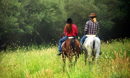 OneHour Horseback Trail Ride for Two or Four with Optional Drinks from Wolfshohl Horse Training (Up to 62% Off)