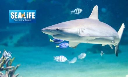 $75 Minute Shark Snorkel Experience + SEA LIFE Entry at SEA LIFE Sunshine Coast Up to $116 Value