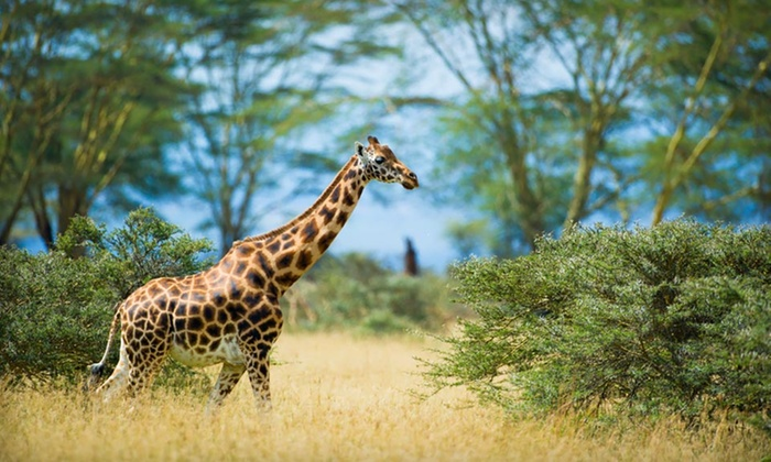 Kenyan Safari with Airfare - Africa Answers: Eight-Day Tour of Kenya with Airfare, Accommodations, Some Meals, and Game Drives from Africa Answers