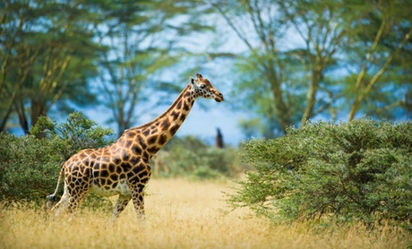 Guided Kenyan Safari with Airfare