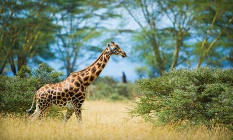Guided Kenyan Safari with Airfare