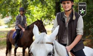 A.S.D. Riding Club Firenze: 5 o 10 lezioni di equitazione da A.S.D. Riding Club Firenze (sconto fino a 81%)