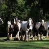 Up to 48% Off Horse-Farm Walking Tour