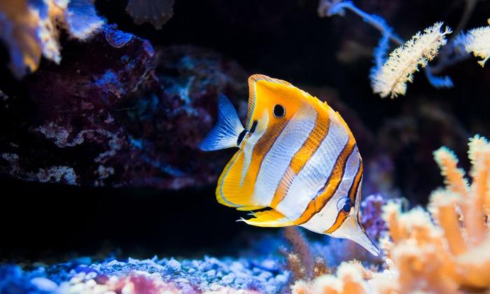 Aquatica - San Marcos: $69 for $125 Toward Custom Aquarium Set-Up Estimate at Aquatica