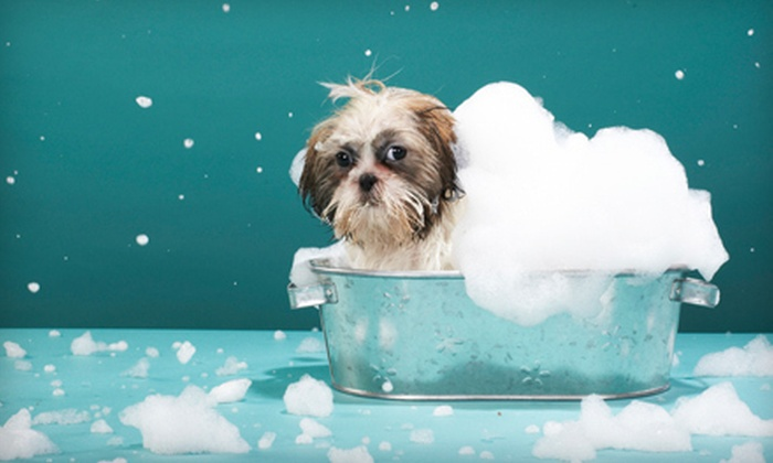 Happy Tails Pet Spa & Resort - Royal Palm Beach: $15 for Dog Spa Bath Package with Bath, Ear Cleaning, and Nail Trim at Happy Tails Pet Spa & Resort (Up to $35 Value)