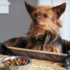 $19.99 for a Clip-On Pet Seat