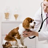 50% Off Veterinary Services