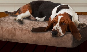 Paw Memory Foam Dog Bed With Removable Cover Review