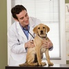 45% Off Veterinary Services