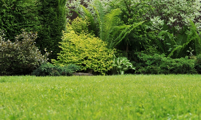 Magnolia Outdoor Solutions - Northeast Cobb: $65 forLawn Aeration for up to 6,000 sq. ft. fromMagnolia Outdoor Solutions($130 Value)