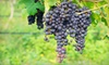 Beer and Wine Hobby - Mishawum: $35 for a One-Hour Fall Harvest Introductory Fresh Winemaking Class for Two at Beer & Wine Hobby ($70 Value)