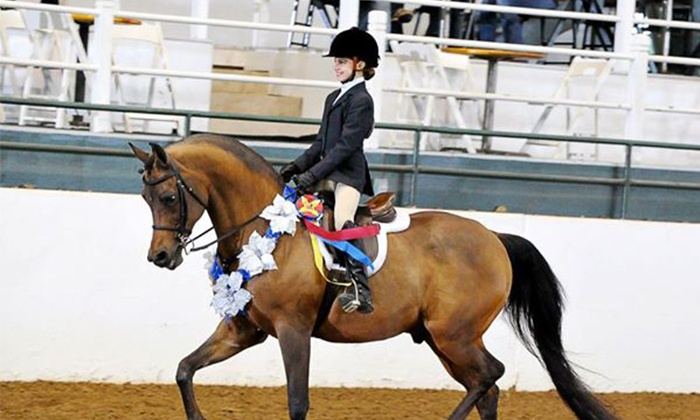 Bay Area Equestrian Center - Pearland: One or Two Private Horseback-Riding Lessons at Bay Area Equestrian Center (47% Off)