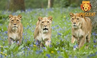 Longleat Entry Ticket for an Adult, Child or Senior with a £5 Food and Beverage Voucher (Up to 19% Off)