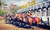Santa Anita Chili Cookoff - Santa Anita Park: Horse-racing Package with Box Seats and Programs for Two or Four at Santa Anita Park (Up to 61% Off)