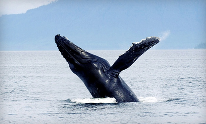 Starlight Fleet - Wildwood Crest: Three-Hour Whale- and Dolphin-Watching Tour for Two or Four from Starlight Fleet (Up to 53% Off)