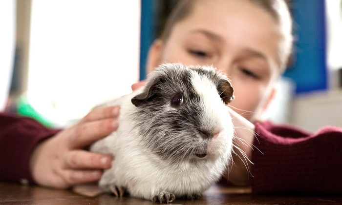 Pawsitively Pets For Kids - Leaside: Eight-Week Kids' Animal  Classes at Pawsitively Pets For Kids (50% Off). Two Options Available.