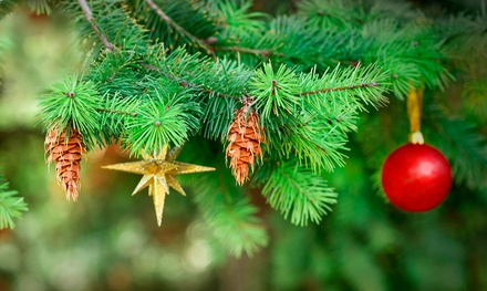 Christmas Tree with Delivery from Hilltop Christmas Tree Farms (Up to 49% Off). Two Options Available.