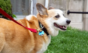 Daytripping Dogs, LLC: Two or Four Dog Walking Sessions from Daytripping Dogs, LLC (Up to 60% Off)