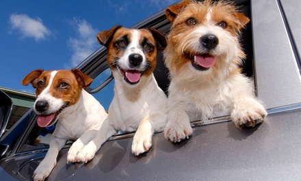Home Dog Boarding from Rover.com (Up to 67% Off)