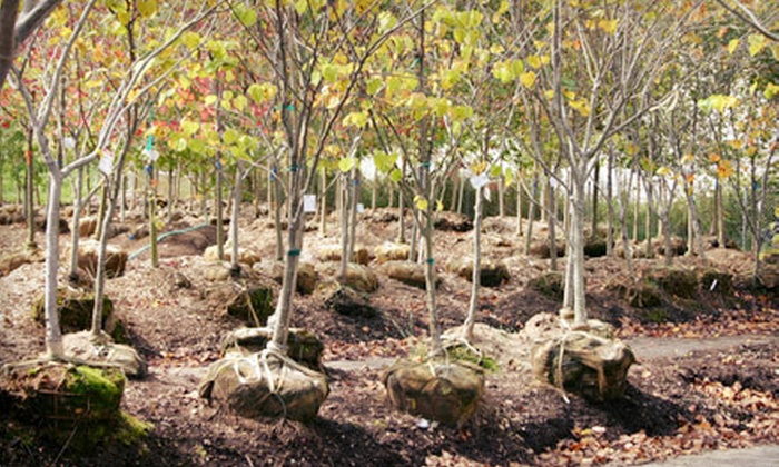 Green Stem Garden Center - Lee's Summit: $140 for Any Tree at Green Stem Garden Center (Up to $300 Value)