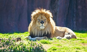 Virginia Zoo – Up to 50% Off Visit
