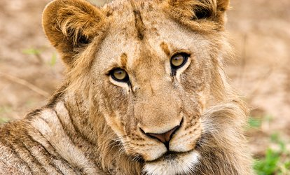 image for One or Two Adult or Children's Tickets to Wildlife Safari (Up to 49% Off)