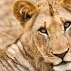 Up to 40% Off at Wildlife Safari