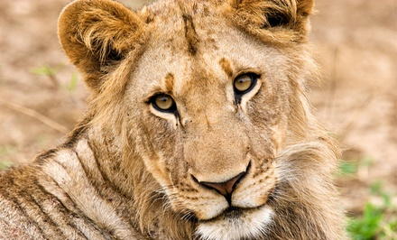 Two Adult Tickets or Two Child Tickets with One Feed Me Cup at Wildlife Safari (Up to 40% Off)