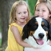 84% Off Pet Photo Shoot from Portrait Scene