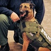 $10 Donation to Help Provide Protective Vests for Dogs