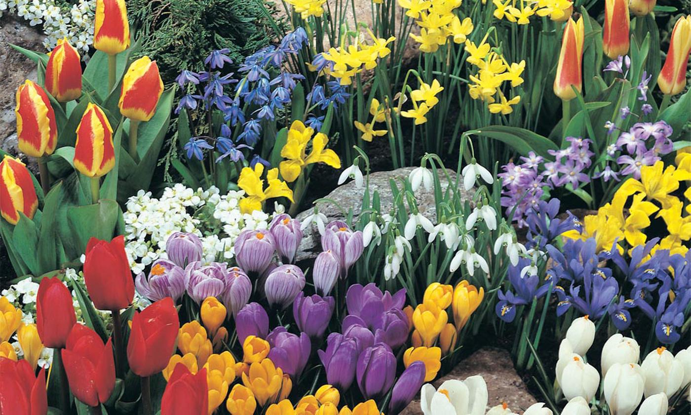 Spring Flowering Bulb Bonanza Collection Up To 200 Bulbs