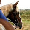 Up to 53% Off Private Horseback-Riding Lessons