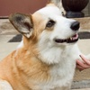 55% Off Petsitting and Dog-Walking Services