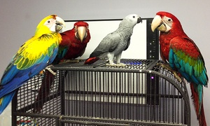 Winging it aviary: Bird Food and Supplies at Winging it Aviary (50% Off)